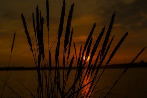 sun sonnenschei sunset
