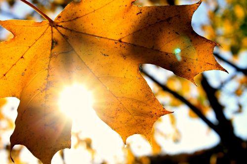 sun autumn october