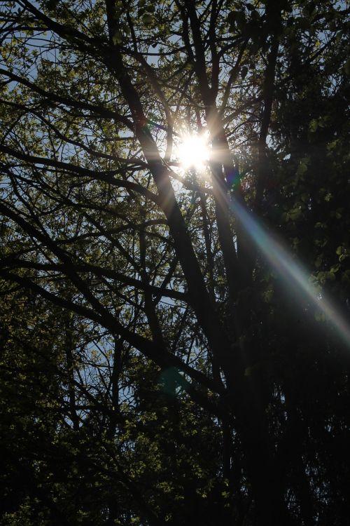 sun forest grove