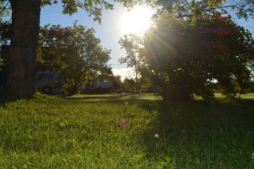 sun nature summer