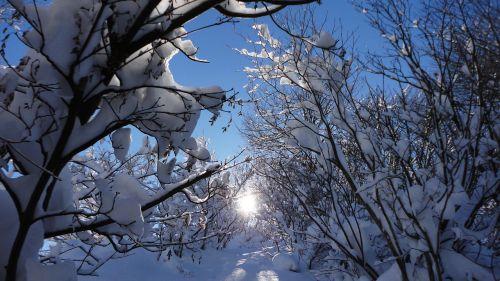 saulė,sniegas,saulės spinduliai,žiema,miškai,kalnas,saulės šviesa,kelias,šaltas,šviesus,giedras dangus,balta,mėlynas,natūralus,sniego scena,kraštovaizdis,Natūralus grožis,sniego šakos,augalas