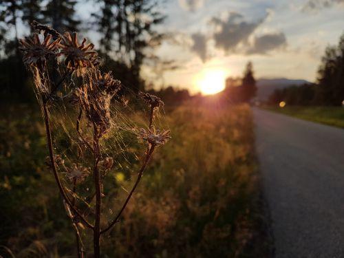 sun cobwebs nature