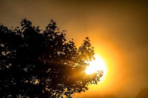 sun sunbeam aesthetic