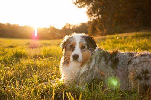 sun sunset dog