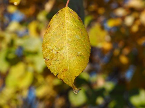 sun fall foliage autumn