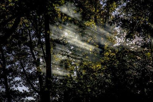 sun  rays  nature