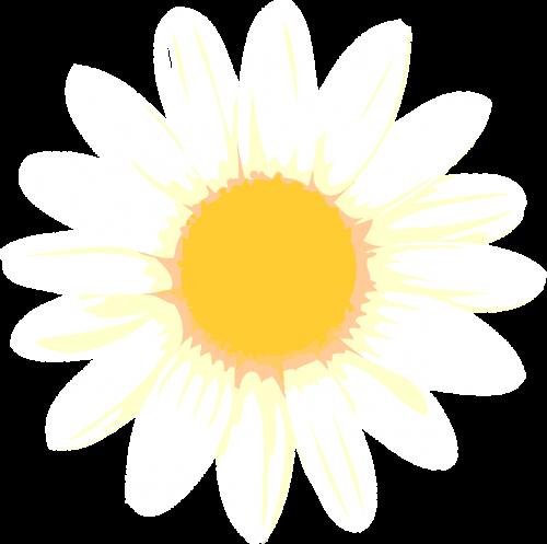 sun yellow margaret