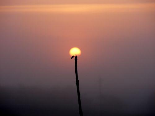 sun the haze flower