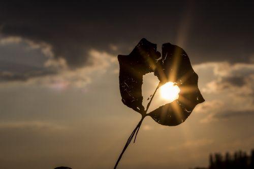sun heart autumn