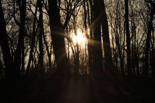 sun light forest