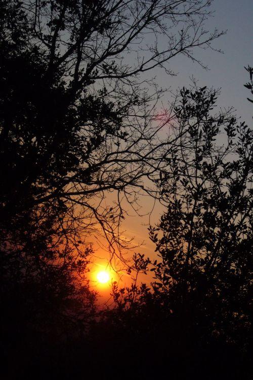sun darken alba