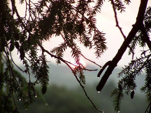 sun trees raindrops
