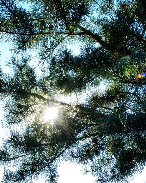 sun ray of hope sunlight