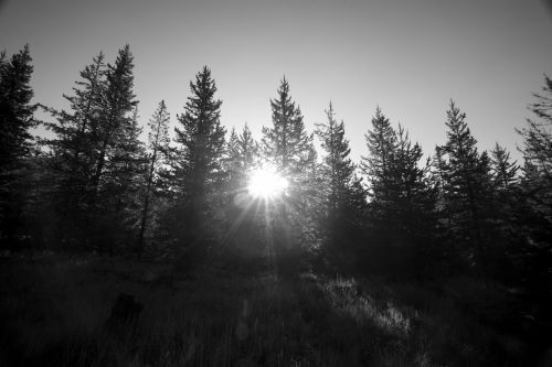 Sun Behind The Pines
