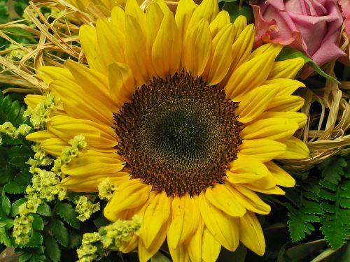 sun flower flower yellow