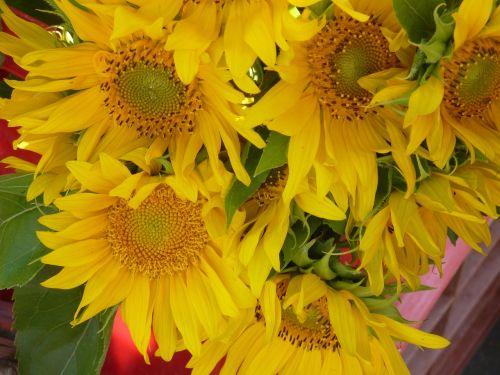 sun flower sunflower seeds sunflower oil