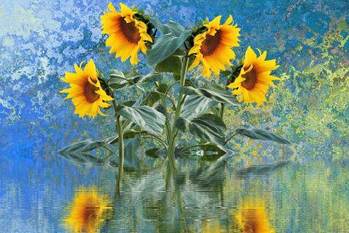 sun flower summer sun
