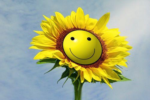 sun flower smilie smile