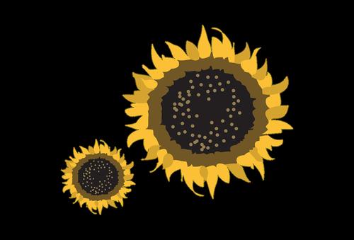 sun flower  nature  yellow
