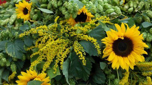 sun flower hops autumn