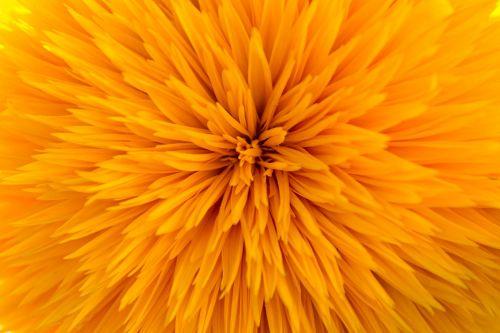 sun flower filled gene defect