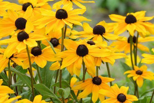 sun hat yellow yellow flowers
