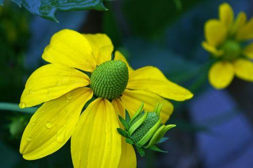 sun hat yellow flowers yellow