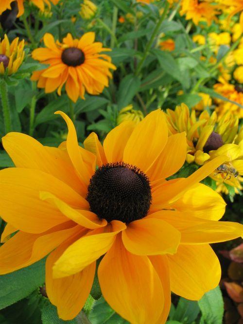 sun hat yellow flower blossom