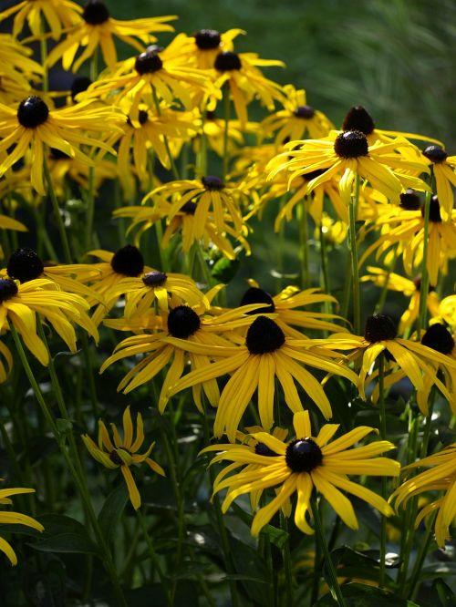 sun hat yellow blossom