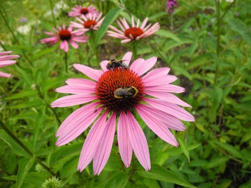sun hat bumblebees bees