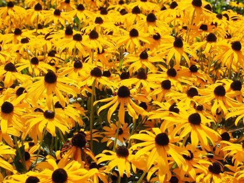 sun hats flowers yellow