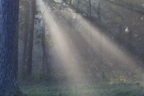 sun light sunshine rays