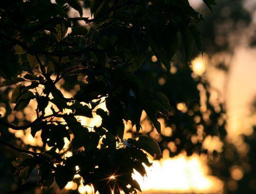 Sun Penetrating Foliage