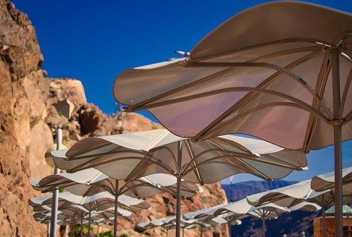 sun protection  shade tree  canopy