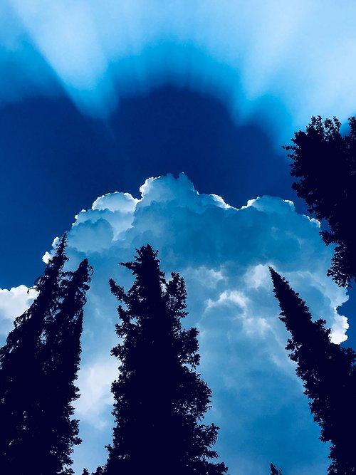 sun rays  pine trees  sky