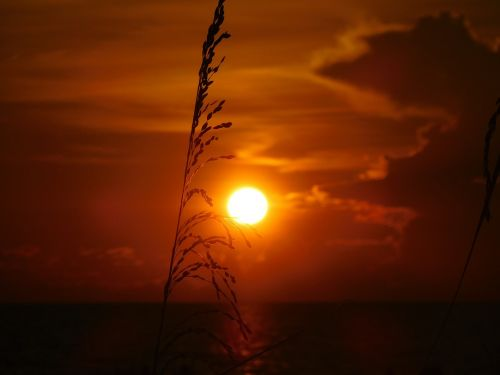 sun set ocean sun