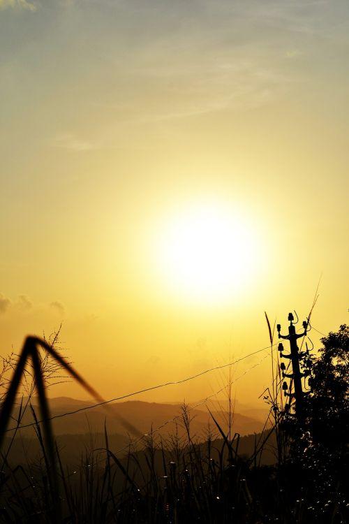 sun set plant nature