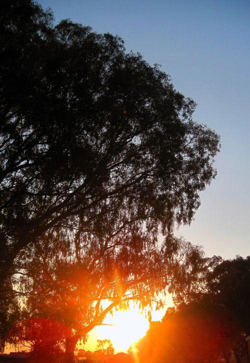 Sun Setting Beyond Big Tree