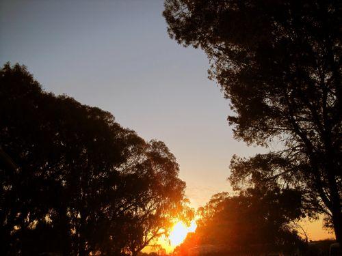 Sun Setting Beyond Trees