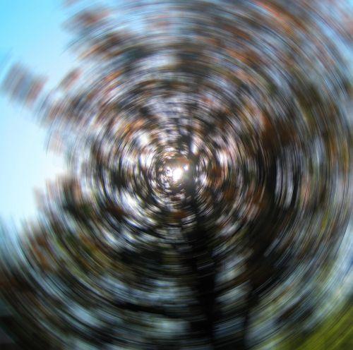 medžiai, blur, nugara, saulė, saulė per sidabro ąžuolo blur