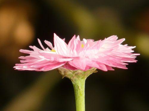 sun wing flower blossom