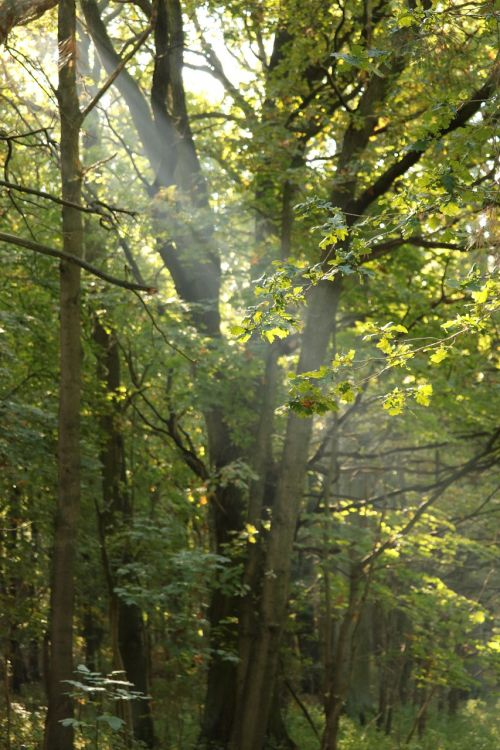 sunbeam forest mood