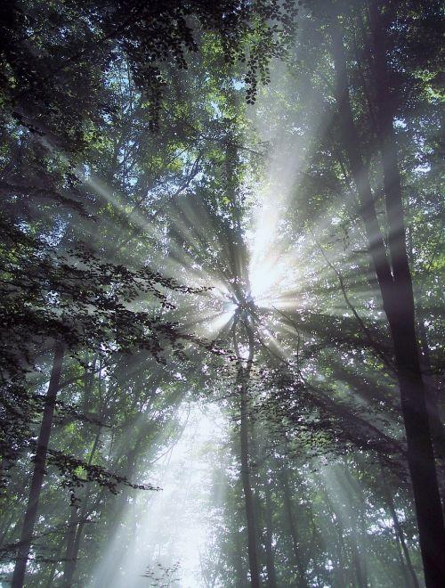 sunbeam trees rays