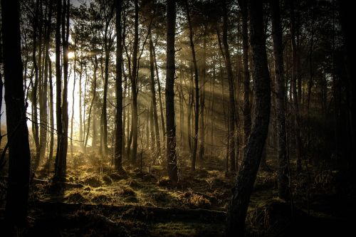 sunbeam forest nature