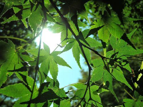 sunbeams green landscape
