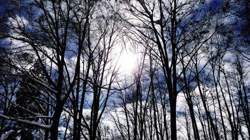 sunbeams sun deadwood
