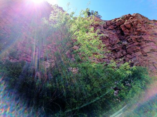 Sunburst In Sedona Canyon