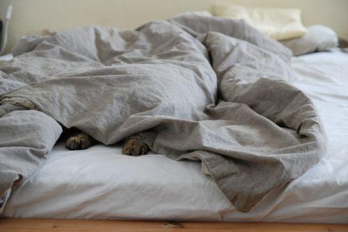 sekmadienis,lova,lazing aplink,tingus,jaukus,miegoti,antklodė,antklodė,katė,katės kaklas,atsipalaidavęs,gyvūnas