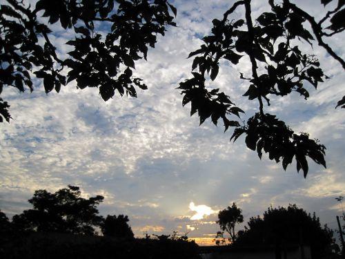 Sundown Framed By Foliage