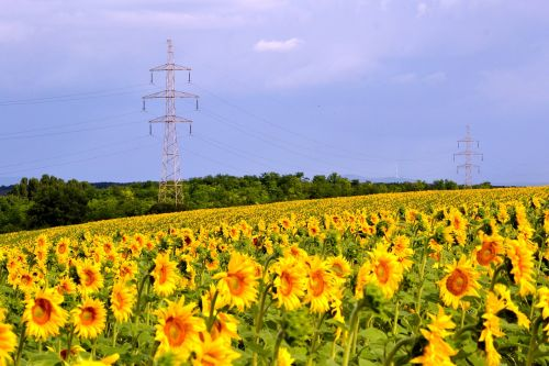 sunflower transmission line cloud